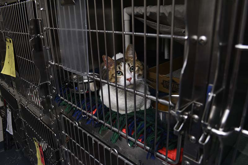 kcpp cat for adoption